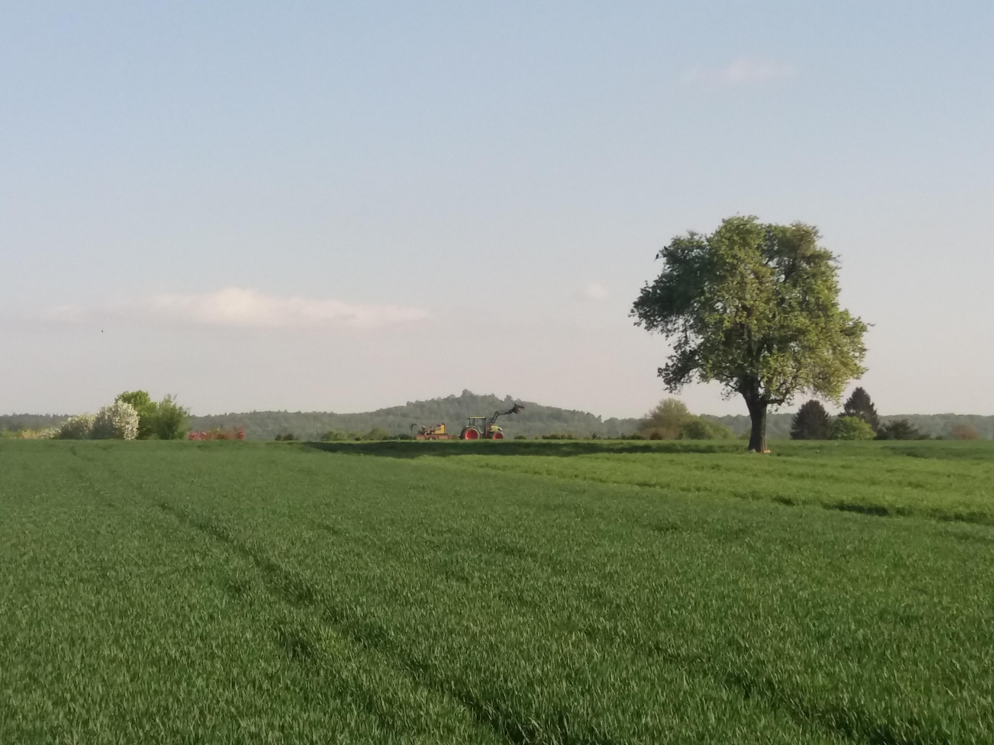 Campo verde, uma árvore frondosa, um trator e várias árvores ao fundo, morros mais ao fundo ainda, céu limpo.