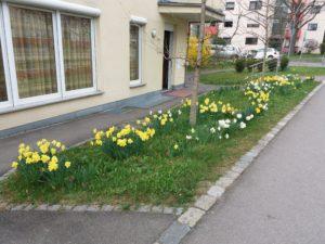 Jardim em frente a uma casa, com flores brancas e amarelas.