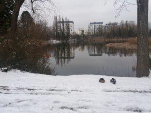Lago, céu nublado, prédios e vegetação seca refletidos na água, em primeiro plano neve e dois patos encolhidos.