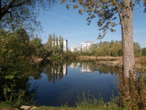 Lago, céu azul, árvores e prédios ao fundo refletidos na água, árvores em primeiro plano.