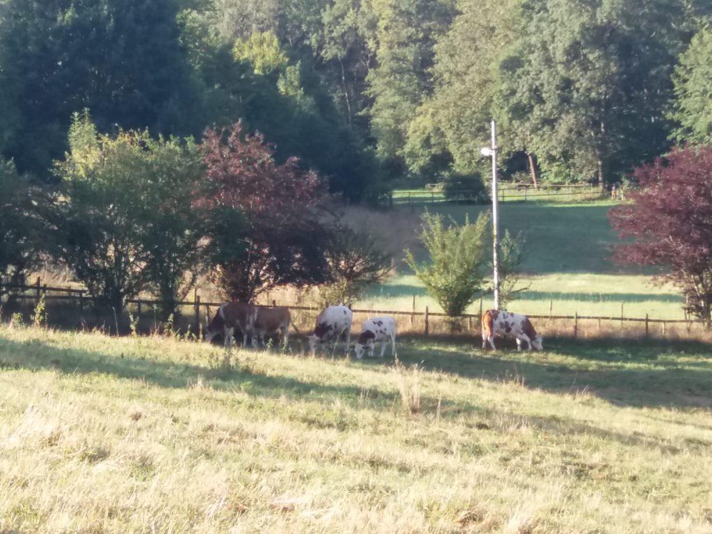 Pasto gramado com algumas árvores e vacas pastando à sombra.